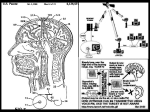 mind and brain control hypnosis